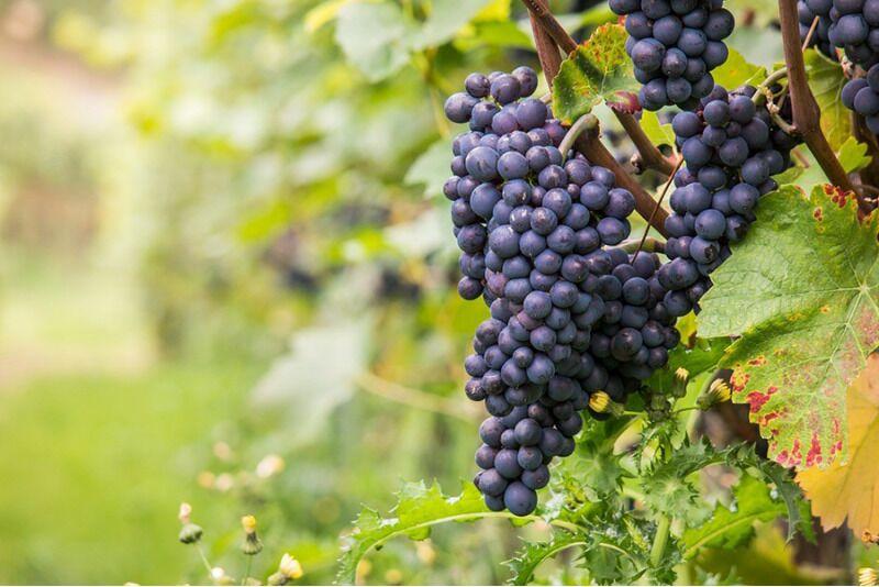 (Kodu) Veini valmistamine Tallinnas või Tartus ühele