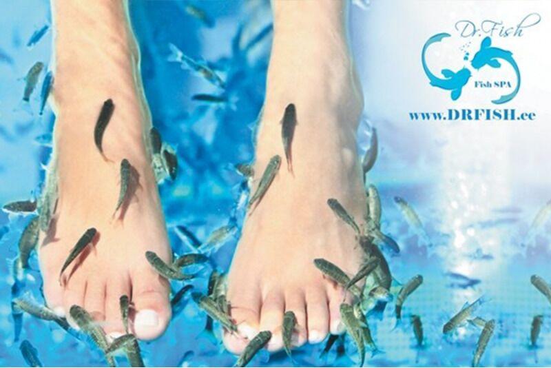 Рыбная терапия для ног с рыбками Гарра Руфа в Таллине
