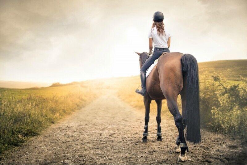 Ratsutamine hobusega Anykščiai ümbruses