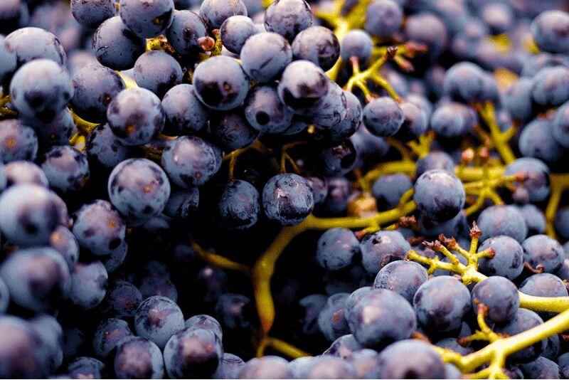 Антистрессовый уход за телом в Таллине - терапия красным вином