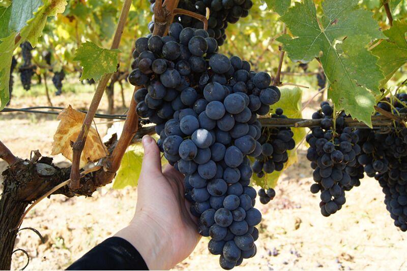 Põnev veinide maailm osa 3: Itaalia tähtsamad veinipiirkonnad